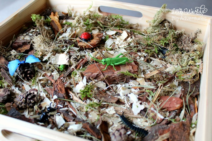 How to set up a simple Bug Discovery Sensory Bin